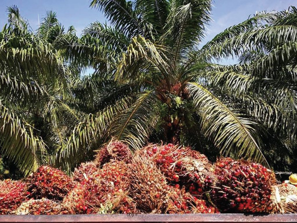 Reason Nigeria needs palm oil council'
